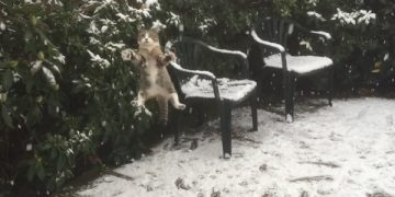 Cat Experiences Snow For The Very First Time