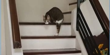 Disabled Cat With Only Two Legs Tackle The Staircase Like A Pro!