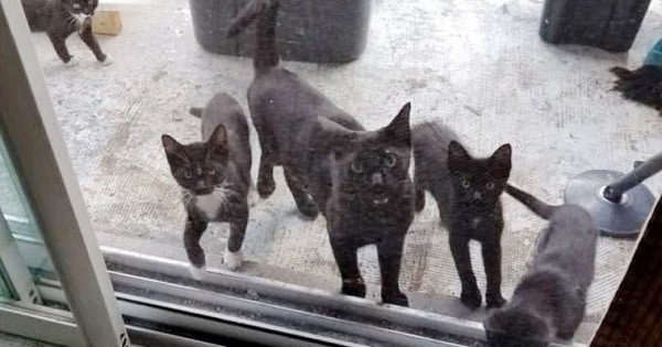 Family Gives Food To Feral Cat, She Comes Back Later With Her 4 Babies