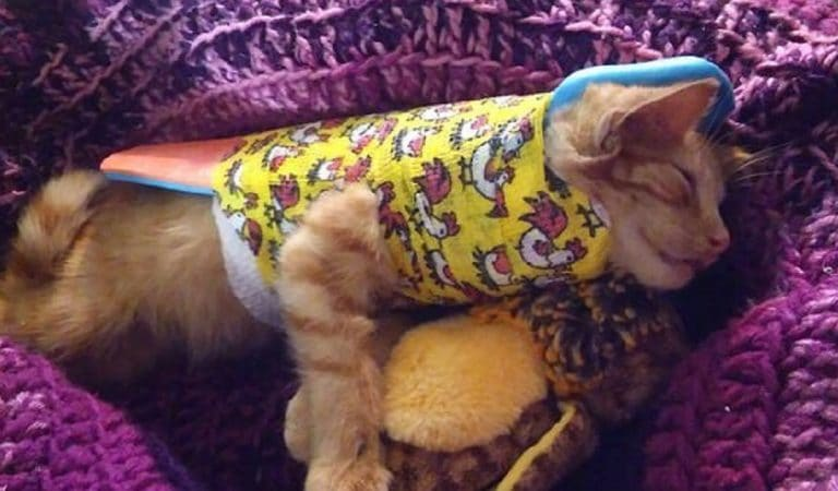 Davey The Stray Cat Gets A New Lease On Life After Being Hit By Car