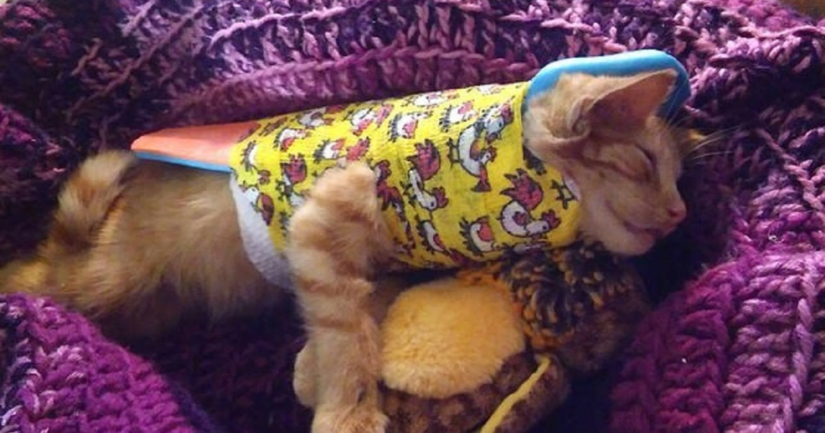 Lucky Stray Kitten Gets A Second Chance At Life After Being Hit By Car