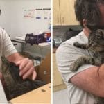 Man Emotionally Reunites With His Lost 19-Year-Old Cat After 7 Years Apart