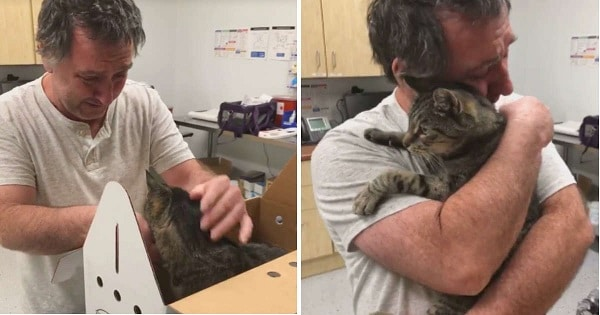 Man's Emotional reunion With His Lost 19-Year-Old Cat After 7 Long Years Apart!