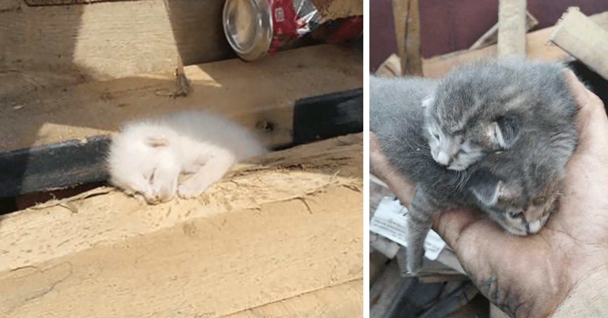 Man Spends 7 Long Hours Rescuing Litter Of Kittens Buried Under Pile Of Wood