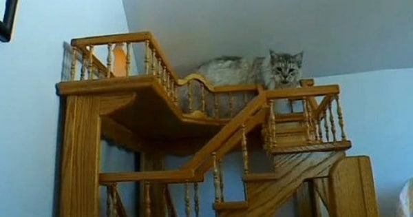 Man Spends A Whole 15 Years Working On His House Including Indoor Fun House Just For Cats