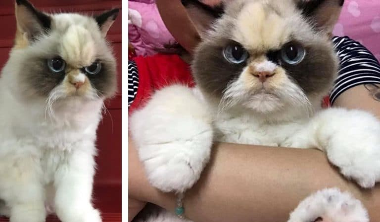 Meet the New Grumpy (and Fluffy) Cat