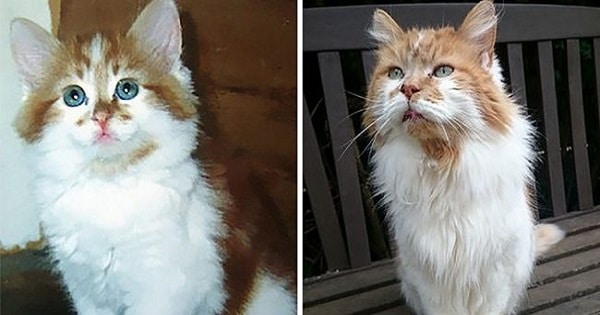 Owner Got A Cat In 1988, Did Not Expect To Throw Him A Birthday Party 30 Years Later