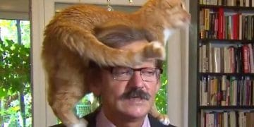 Polish Academic Reacts Hilariously When His Cat Interrupts His Interview!