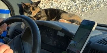 Stray Cat Won't Let Traveling Couple Leave Her Behind