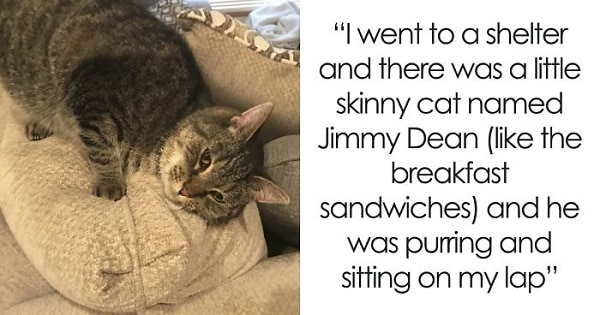 Woman Posts A Story About Adopting A Cat Named After A Breakfast Sandwich