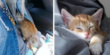 Scared Stray Kitten Comes Out Of His Shell After Just A few Hours Of Care And Love