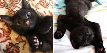 10+ Photos Proving That Black Cats Are Truly Awesome Creatures!