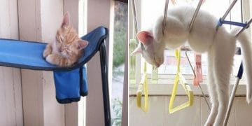 10 Pictures Proving That Cats Can Sleep Anywhere