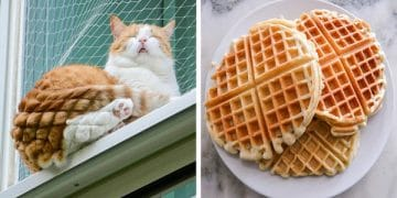 15 Tasty Cats That Look Just Like Foods