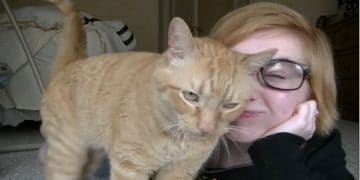 Affectionate Ginger Cat Simply Cannot Stop Loving His Human!