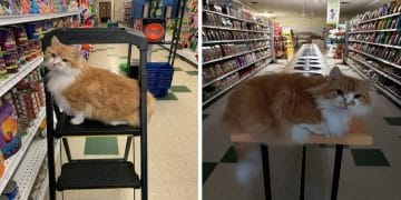 Pet Supply Shop Has The Very Best Furry Employees