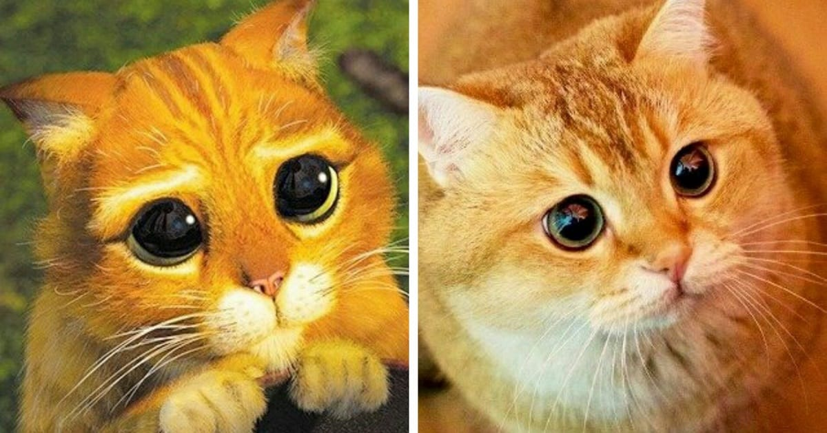 10+ Animals Who Look Like They Came Right Out Of Your Favorite Animated Movies