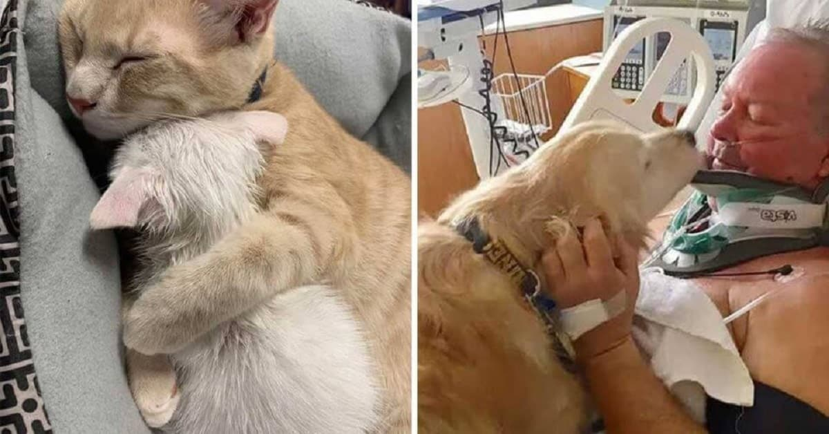 20 Photos Proving Animals Can And Do Make Sacrifices For Those They Love