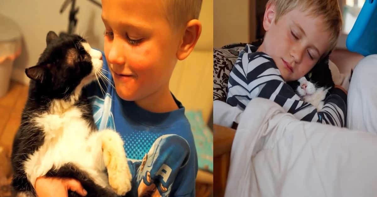 Twenty-Year Old Cat Gets Adopted and He Has Plenty More Love to Give