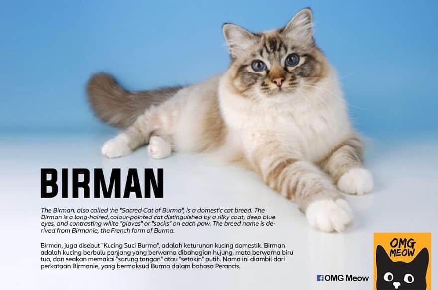 The Birman