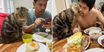 A Cat Thief Steals a Woman's Husband