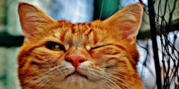 Can't Bond with Your Cat? Try Blinking Slowly