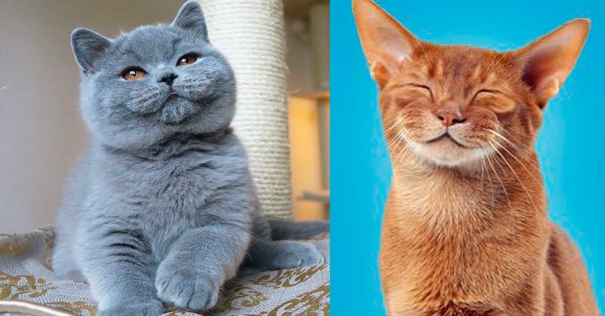 The Origins of the Most Popular Cat Breeds