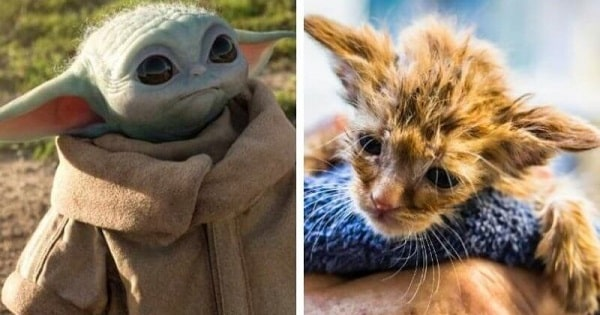 This Baby Yoda Kitten Was Saved from Certain Death