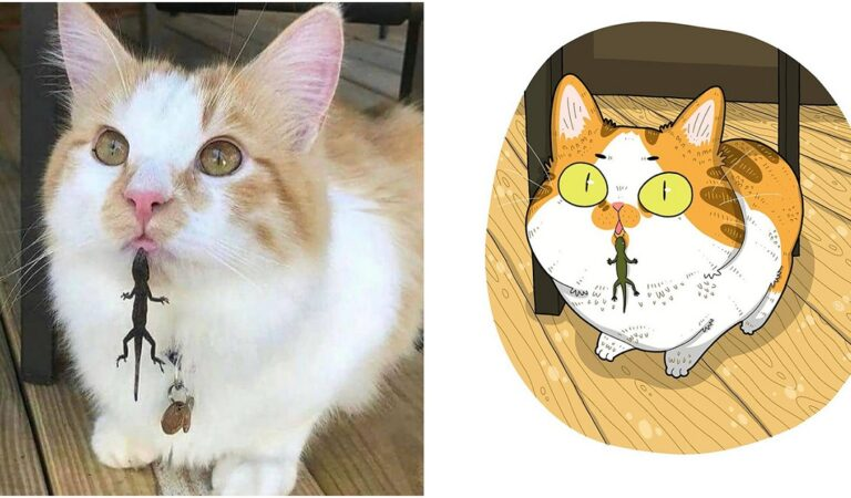 The Funniest Internet Famous Cat Pic Illustrations