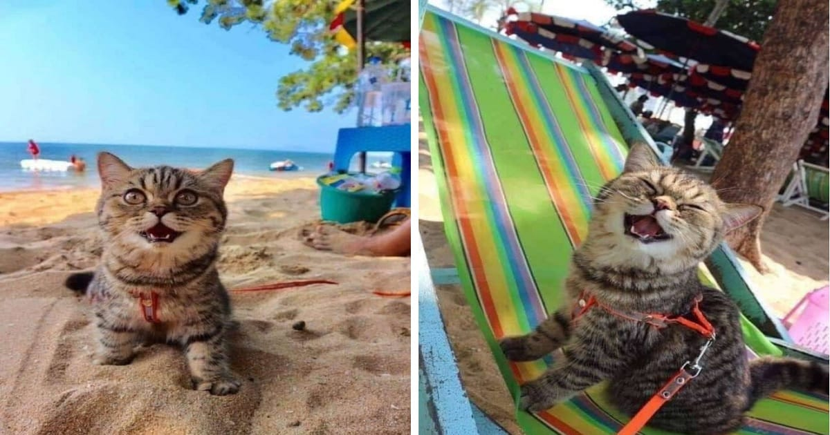 Cat Goes to the Beach and Can't Stop Smiling