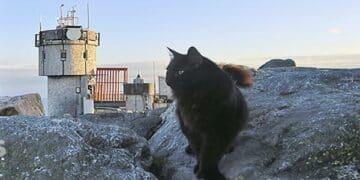 Famous Cat Mascot Dies at Age 12