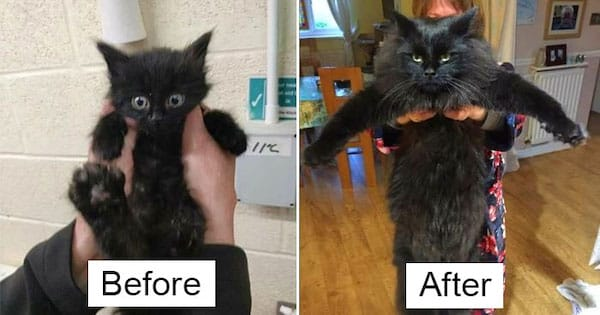 Before & After Pics Of Tiny Kittens Turning Into Beautiful Cats