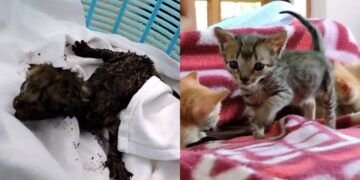 Kittens Had Been Crying for 2 Days in Ventilation Pipe