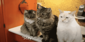 Woman Adopts Cats With Hearing Loss And She Trained Them to Communicate