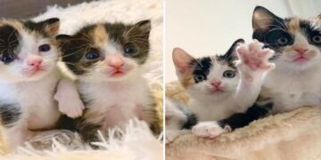 A Pair of Kittens Left to Die on the Roadside Share an Unbreakable Bond