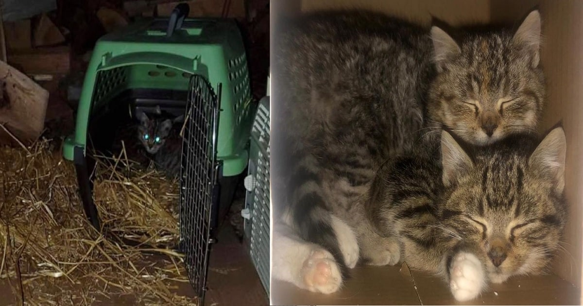 A Sweet Pair of Kittens Get a Happy Ending to Their Story