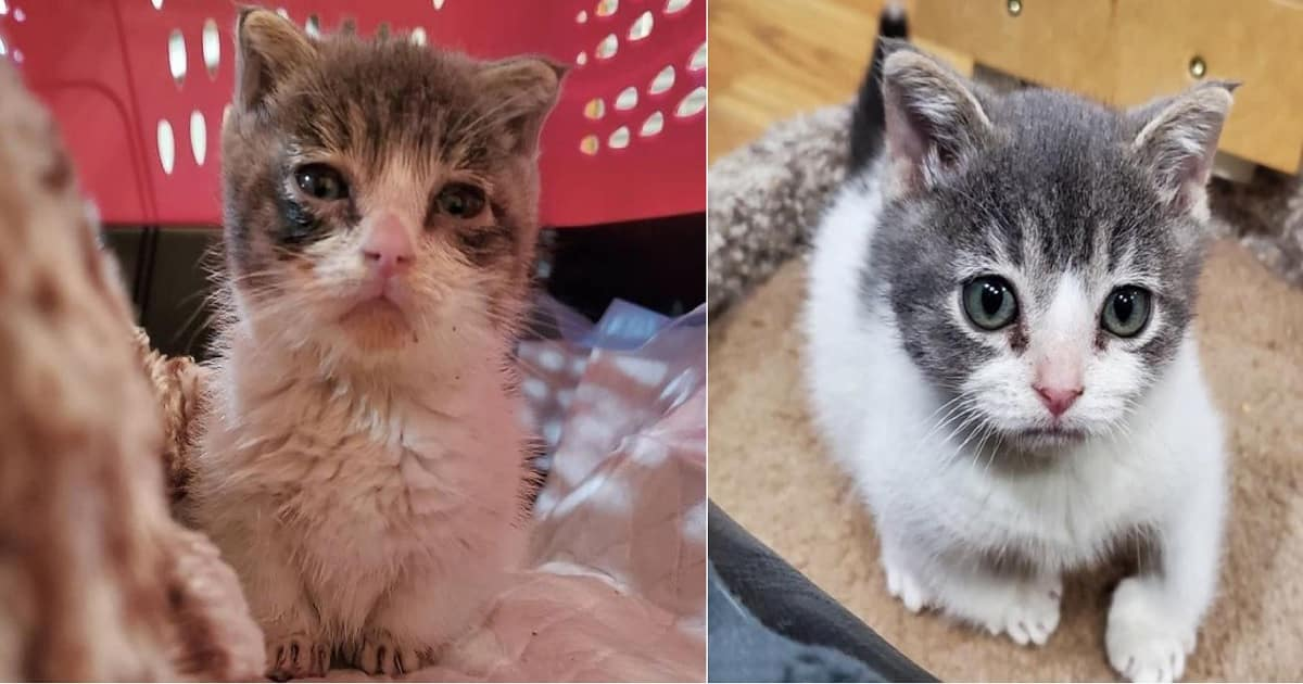 Kitten Born with a Rare Condition Bonds with Grandpa Cat After It Was Brought Back to Life