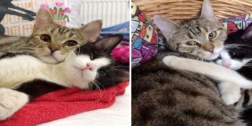 Kitten with 3 Paws Befriends Paralyzed Kitten in and Never Leaves his Buddy's Side