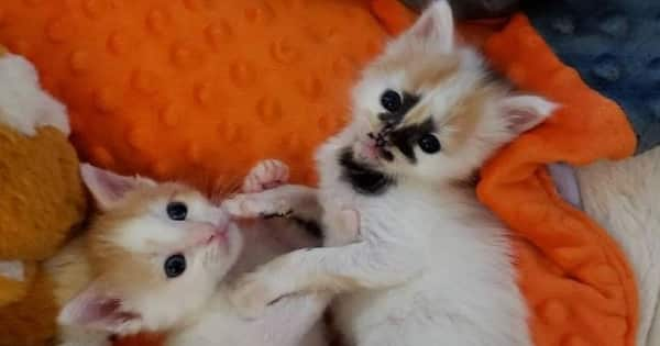 Kitten with Unusual Marks on Her Face is Inseparable from her Sister in This Dream-Come-True Story