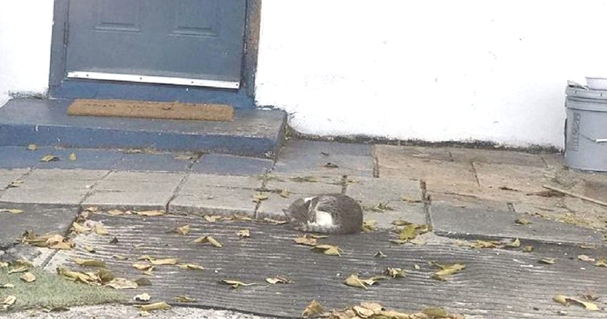 Poor Cat Found Sleeping Outside a House Dreaming of a Warm Home