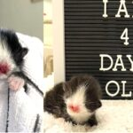 Unusual Sweet-Face Kitten Gets a Second Lease on Life